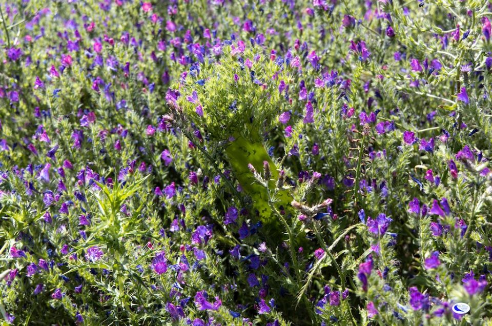 The world of insects, let's observe them up close among the garrigue and the scrubland of Giglio Island