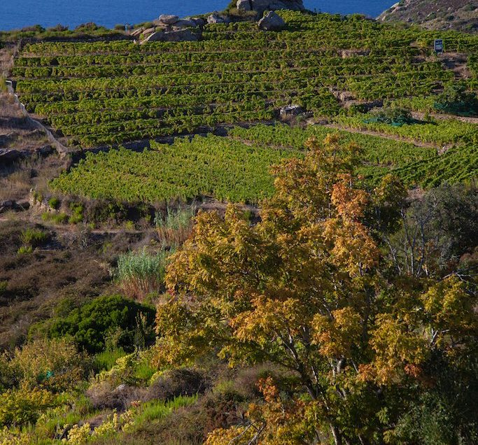 km 0 trekking. In equilibrium between land and sea: visit and tasting in the orchard