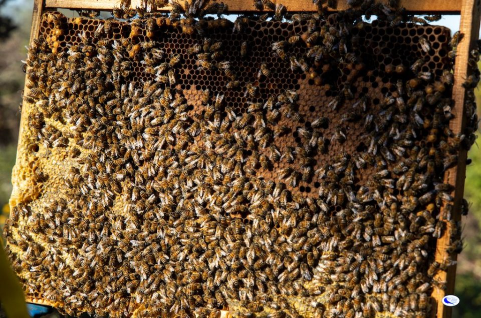 """In the court of... Queens: visit and tasting at """"The Queens"""" apiary"""